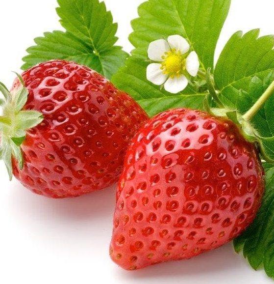 Fruits et légumes à Nantes | production de légumes, fraises, citrouilles